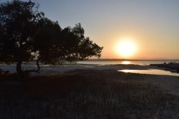 Mangrove tree, Qulaan